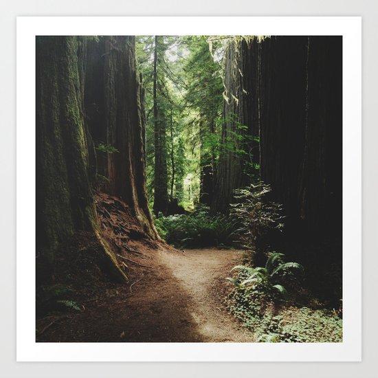 Redwood Trail Art Print