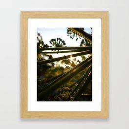 Poison Hemlock 3 Framed Art Print
