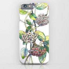 Light white-pink flower - HOYA iPhone Case