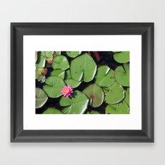 Pink Flower in the Pond Framed Art Print
