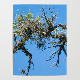 Treehuggers Poster