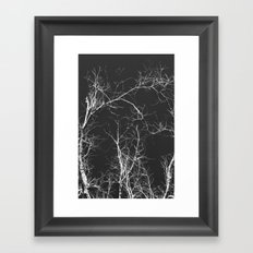 Branches and Sky Framed Art Print