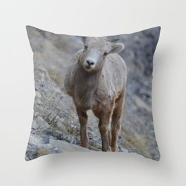 Big horn lamb learns the way of the rock Throw Pillow