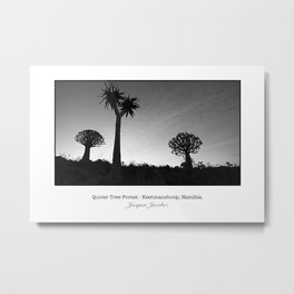 Quiver tree forest at Keetmanshoop Metal Print