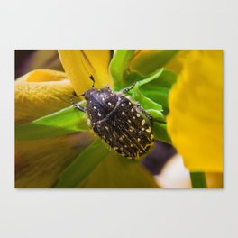 Spotted Bug Canvas Print