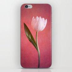 delicate iPhone & iPod Skin