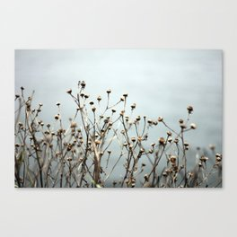 Blue Weeds Canvas Print