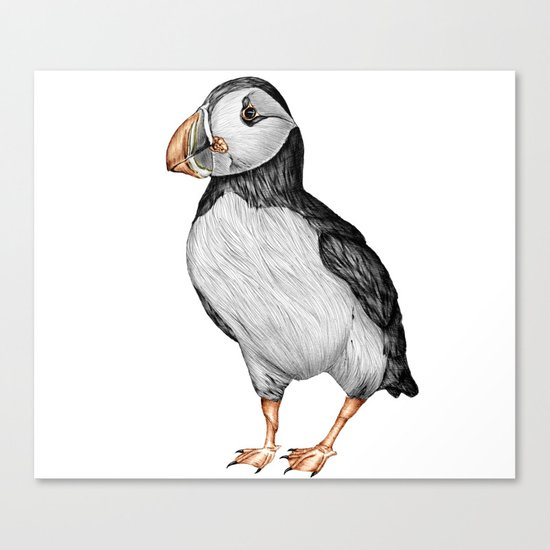 Little Puffin Canvas Print