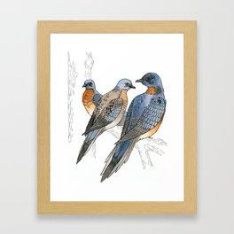 Passenger Pigeons Framed Art Print