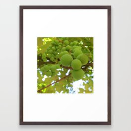 Green grapes 2 Framed Art Print