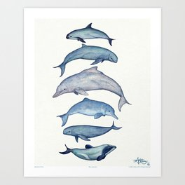 """""""Rare Cetaceans"""" by Amber Marine - Watercolor dolphins and porpoises - (Copyright 2017) Art Print"""