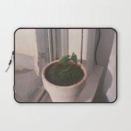 kumquat seedling 2017 Laptop Sleeve