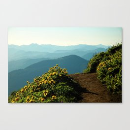 Flowering Balsam Root on Dog Mountain, Columbia River Gorge, Oregon Canvas Print