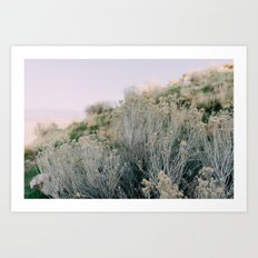 Desert Blush Art Print