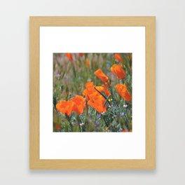 Pack of Poppies Framed Art Print