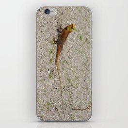 Tiny Dragon iPhone Skin