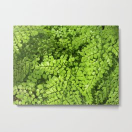 wet fern VI Metal Print