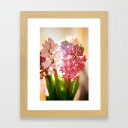 Hyacinth Sunray Framed Art Print
