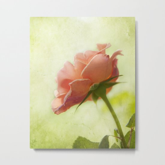 Vintage light pink rose Metal Print