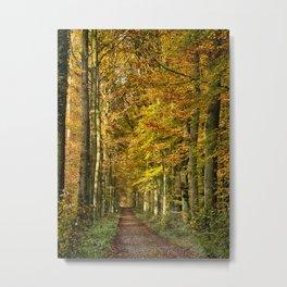 autumn forest lane Metal Print