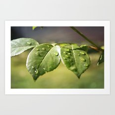 Fresh Dew Drops Art Print