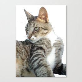 Tabby Cat Isolated Background Canvas Print