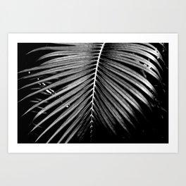 Tropical Darkroom #259 Art Print