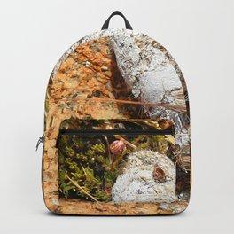 Watercolor Poop, Coyote 01, Windy Gulch, RMNP, Colorado Backpack