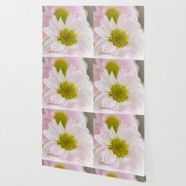One Chrysanthemum flower Wallpaper