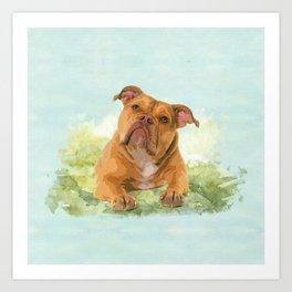 Old English Bulldog Art Print