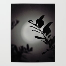 Moonlit Shadows Poster