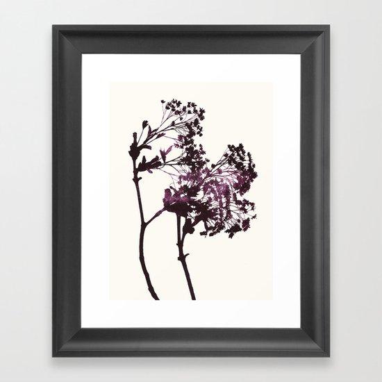 sugar maple 1 Framed Art Print
