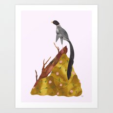 Long tail bird Art Print