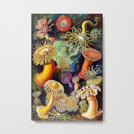 Under the Sea : Sea Anemones (Actiniae) by Ernst Haeckel Metal Print