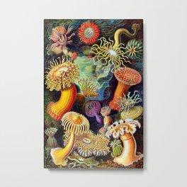 Under the Sea : Sea Anemones (Actiniae) by Ernst Haeckel Metal Print