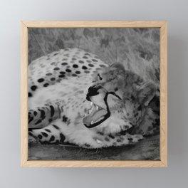 Cheetah fangs Framed Mini Art Print