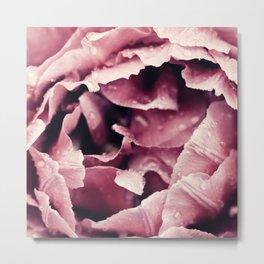 Pink Peony Macro Photography Spring Flowers Metal Print