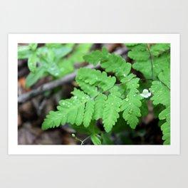 Northern Oak Fern and Raindrops Art Print