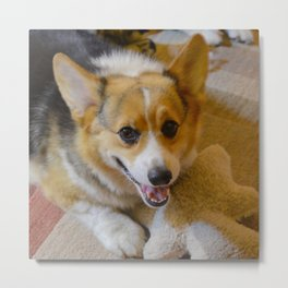 Josh The Corgi Metal Print