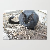 mew Canvas Prints featuring mew by Dottie