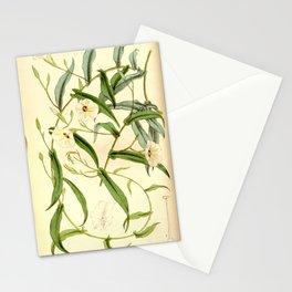 Xenostegia tridentata (Ipomoea filicaulis) Bot. Mag. 90. 5426. 1864 Stationery Cards