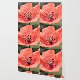 Poppy Macro Wallpaper