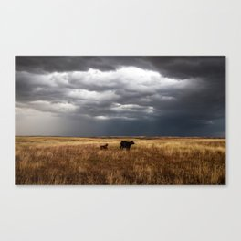 Life on the Plains - Cow Watches Over Playful Calf in Oklahoma Canvas Print