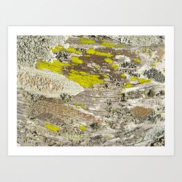 Lichens Over Bark 2 Art Print