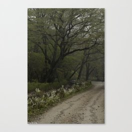 Mist Season Canvas Print
