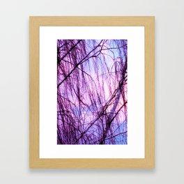 Pink Lavender Sky Through Wispy Trees Framed Art Print
