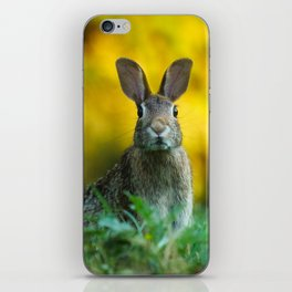 Rabbit | Lapin iPhone Skin