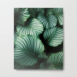 Leaves by Ren Ran Metal Print