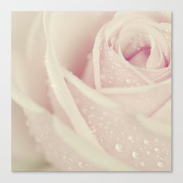 Close-up view of beatiful pink rose with water drops Canvas Print