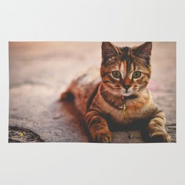 Cute Young Tabby Cat Kitten Kitty Pet Rug
